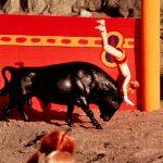 Selene: The Most Famous Bull-Leaper on Earth